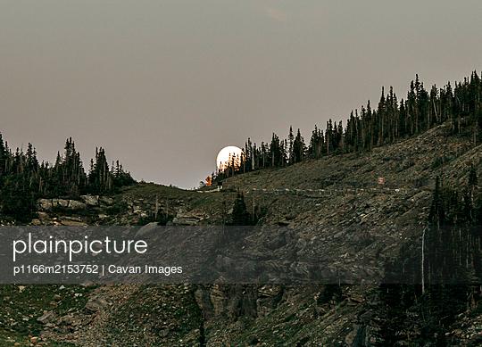 Moon rises over pine trees on Logan Pass, Glacier Park, Montana - p1166m2153752 by Cavan Images