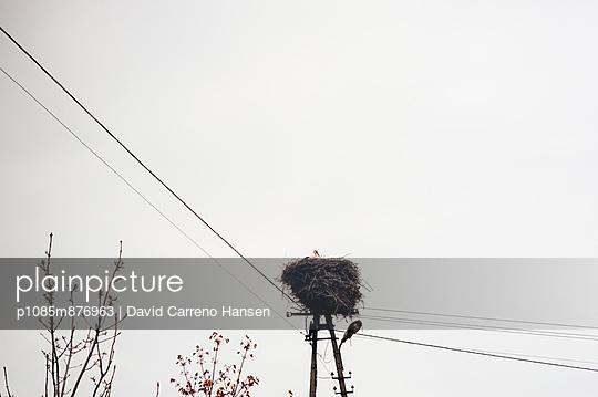 Stork's nest under power - p1085m876963 by David Carreno Hansen
