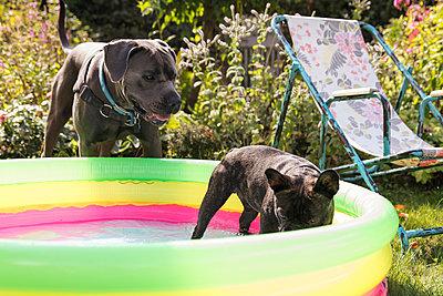Zwei Hunde im Schrebergarten - p788m2027405 von Lisa Krechting