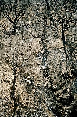 Waldbrandwüste - p2684249 von Stephan Sasek