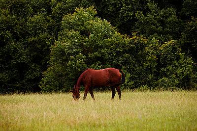 Horse Grazing in Field - p694m663710 by Maria K