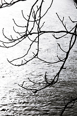 Tree branch over water - p958m2151437 by KL23