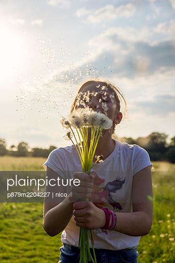Girl blowing dandelion clocks - p879m2204227 by nico