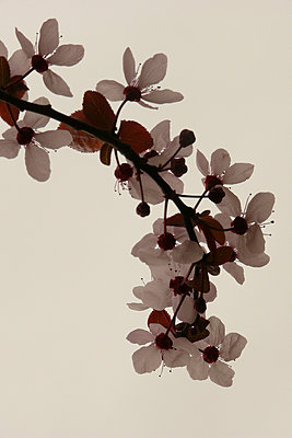 Spring leaves - p685m899907 by Lena Kah