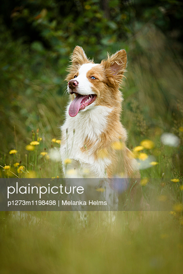 p1273m1198498 by Melanka Helms