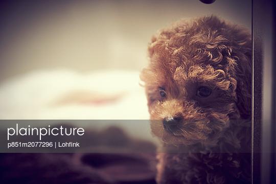 Small dog - p851m2077296 by Lohfink