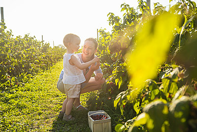 Happy mother and little daughter picking berries in summer - p300m2079414 by Daniel Ingold