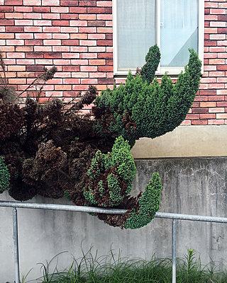 Natur - p1027m1171582 von Carola Björk
