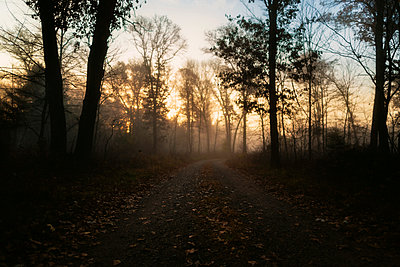 Scenic view of empty road amidst trees in forest during foggy weather - p1166m1209593 by Cavan Images