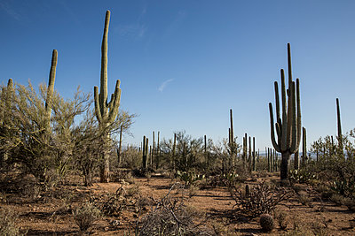 Scenic Sonoran Desert - p1291m1548064 by Marcus Bastel