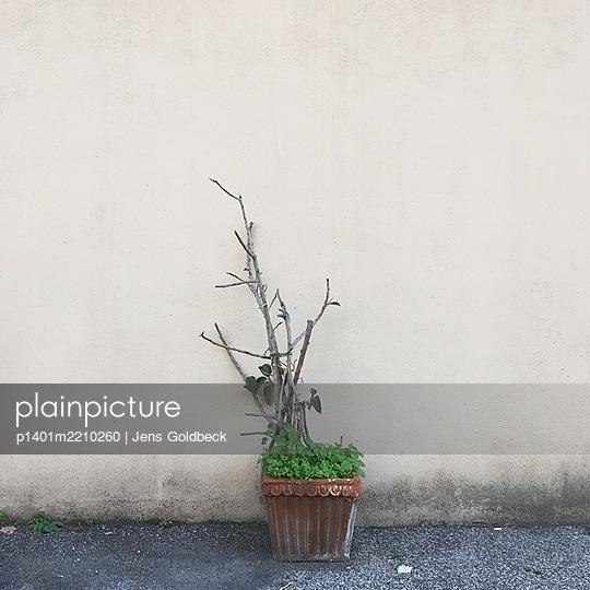 Dried up plant - p1401m2210260 by Jens Goldbeck