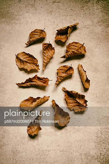 Still life of dried beech leaves on speckled background - p597m2230607 by Tim Robinson
