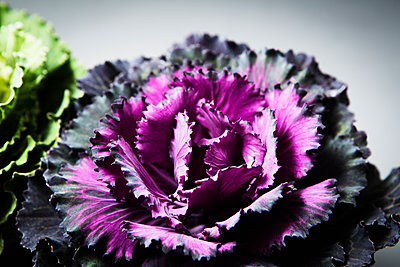 Ornamental cabbage - p1149m1169189 by Yvonne Röder