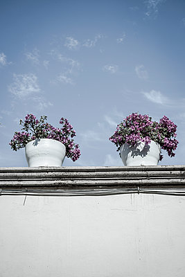 Bougainvillea plants on house roof, Mexico - p1170m1573341 by Bjanka Kadic