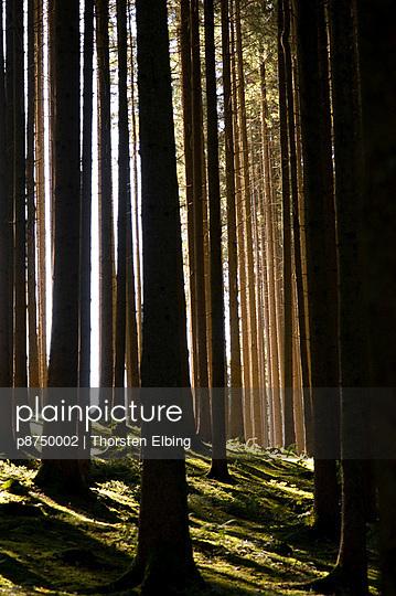 Wald - p8750002 von Thorsten Elbing