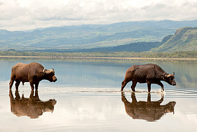National park in Kenia - p5330299 by Böhm Monika