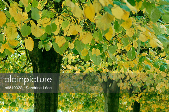 Green and yellow leaves - p6810022 by Sandrine Léon