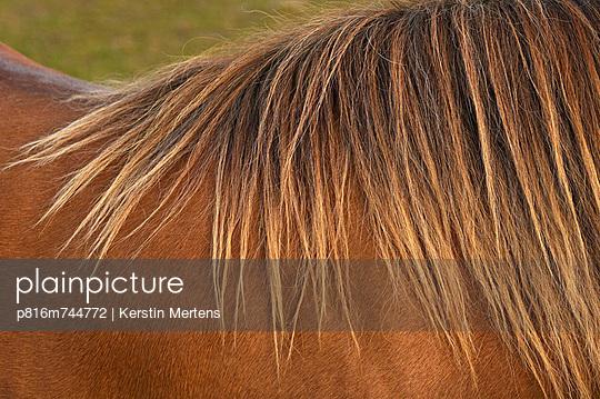 p816m744772 von Kerstin Mertens
