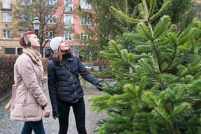 Women choosing Christmas tree - p312m1471199 by Viktor Holm
