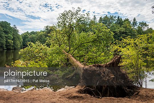 Gefallener Baum - p417m1573915 von Pat Meise