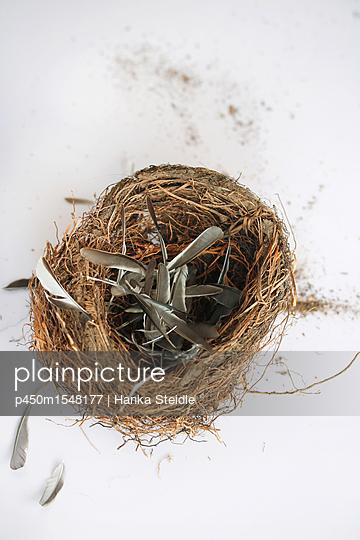 Vogelnest     - p450m1548177 von Hanka Steidle