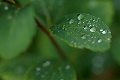 Nasse Blätter - p0810472 von Alexander Keller