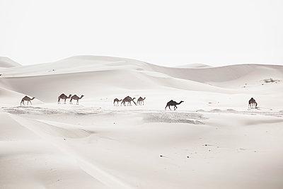 Liwa Wüste - p1217m1090677 von Andreas Koslowski