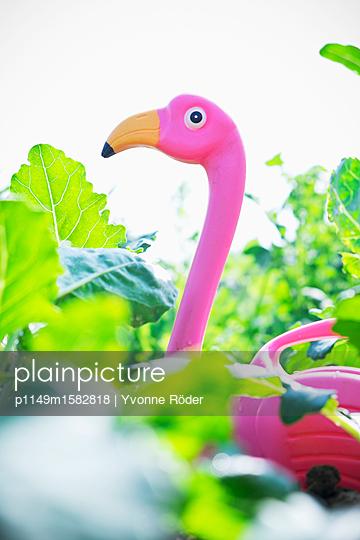 Flamingo im Gemüsegarten - p1149m1582818 von Yvonne Röder