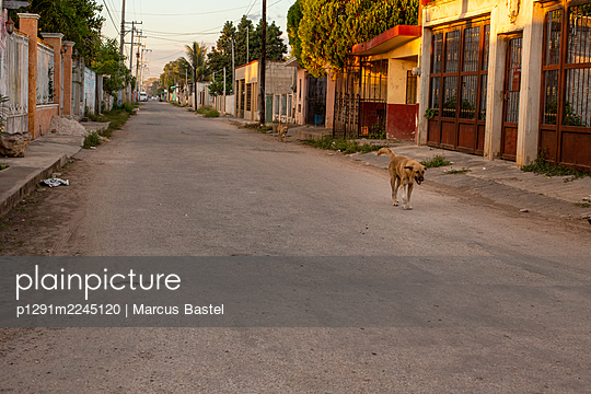 Stray dog on village road, Mexico - p1291m2245120 by Marcus Bastel