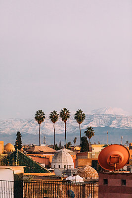 Marrakesh, Four palm trees - p1253m2152626 by Joseph Fox