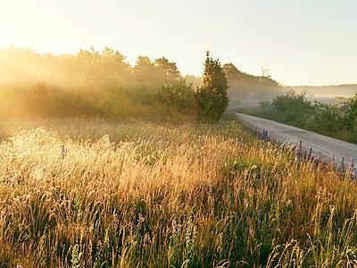 Summer morning - p972m1056526 by Felix Odell