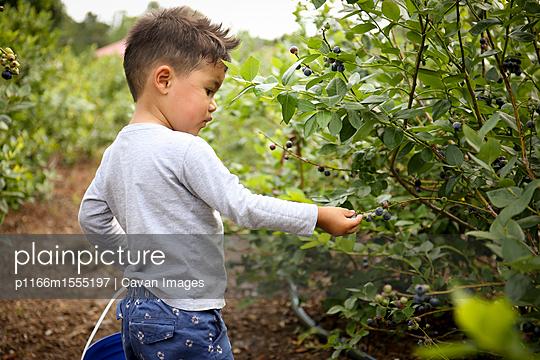 p1166m1555197 von Cavan Images