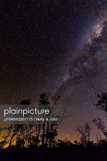 Starry sky and trees, South Africa - p1640m2261115 by Holly & John