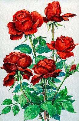 Rose - p1710321 von Rolau