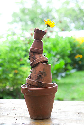 Flower pot still life - p4541517 by Lubitz + Dorner