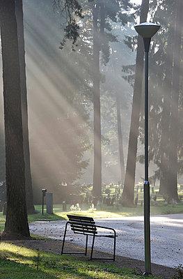 Park at sunrise - p575m696085 by Stefan Ortenblad
