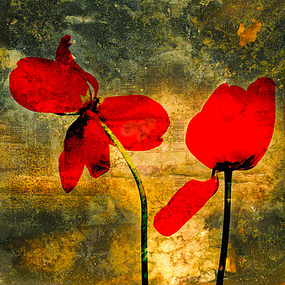 Red tulips on a textured background - p813m924510 by B.Jaubert