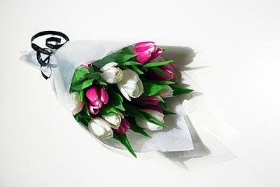 Tulips - p2686935 by Clara Ritz