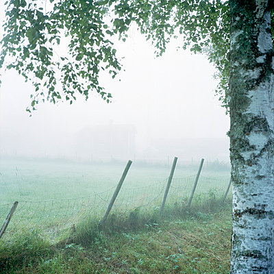 Foggy field - p528m672673f by Johan Willner
