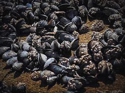 Portugal, Porto, Blue mussels on the beach - p1681m2263296 by Juan Alfonso Solis