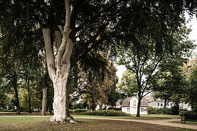 Alter Baum in Hamburger Park - p1222m2228591 von Jérome Gerull
