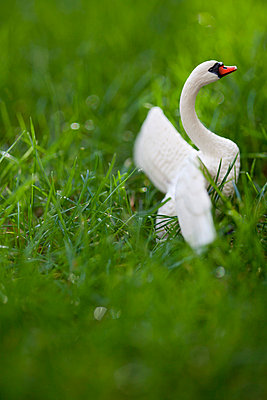 Swan in the grass - p4451370 by Marie Docher