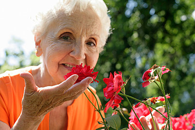Senior woman sniffing red rose blossom - p4902134 by Stock4B