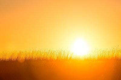 Sunrise in winter - p1057m2151476 by Stephen Shepherd