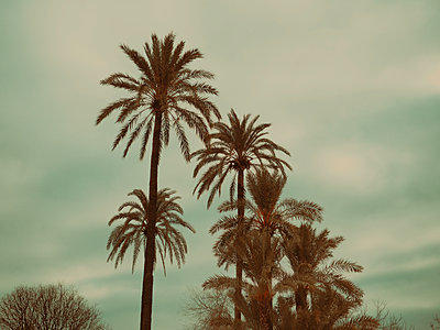 Palm trees - p1681m2263301 by Juan Alfonso Solis