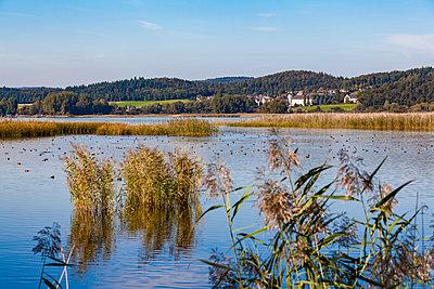 Germany, Reichenau, Wollmatinger Ried - p300m1586988 by Werner Dieterich