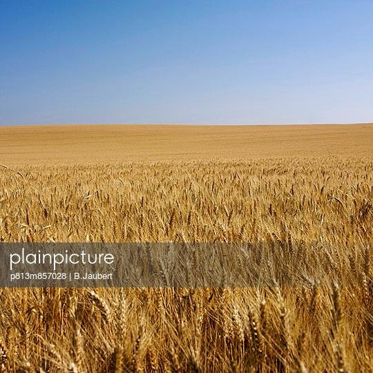 Wheat field - p813m857028 by B.Jaubert