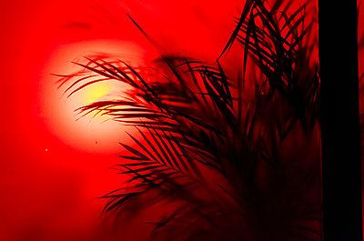 Rotes Licht im Schaufenster - p118m2158294 von Daniel Sadrowski