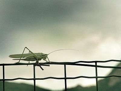 Crickets - p1282m1108566 by Stefano Boragno