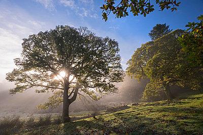 Morning sunshine burning through mist, Lake District, Cumbria, England, United Kingdom, Europe - p871m993818 by Adam Burton